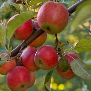 Frutticoltori